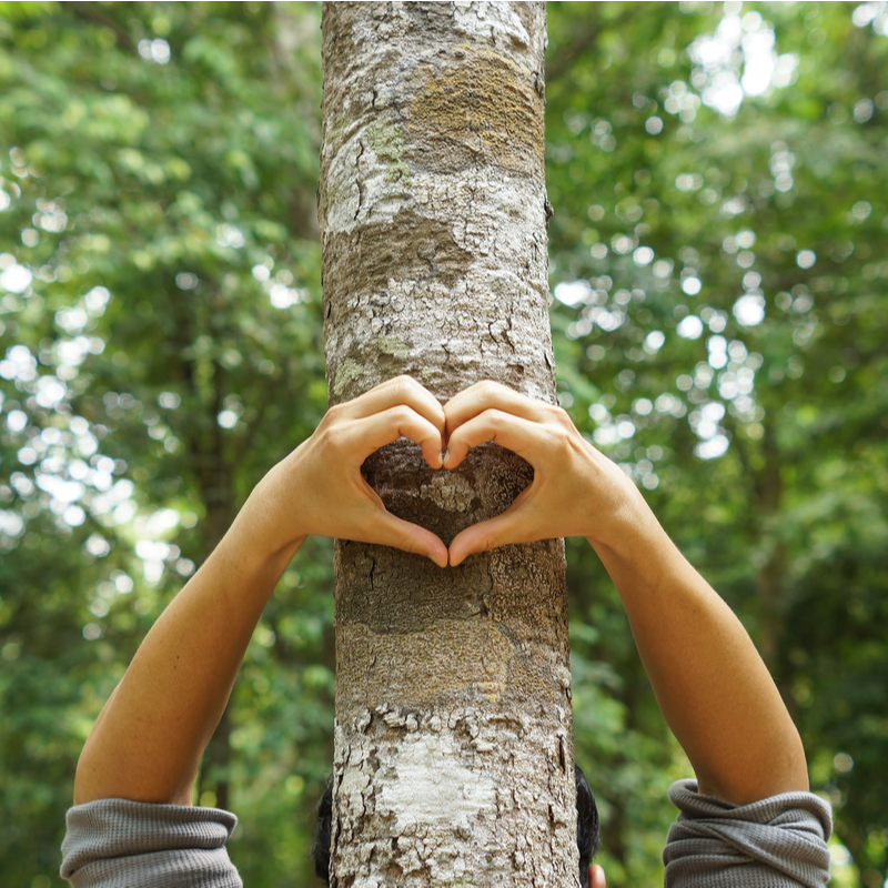 hand making a heart on tree trunk